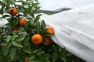 柑橘防霜布